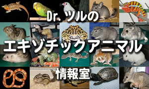 Dr.ツルのエキゾチックアニマル情報室